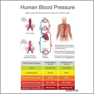 The Blood Pressure Exercises
